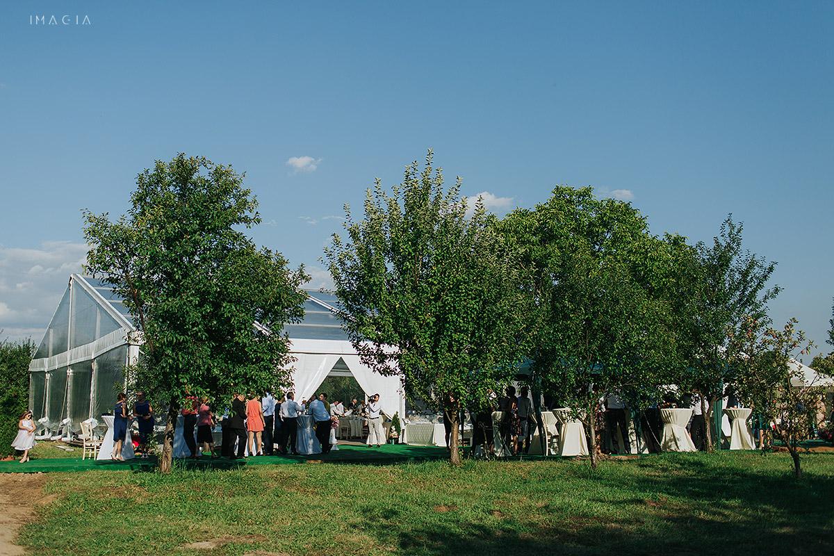Cort de nunta in Baia Mare